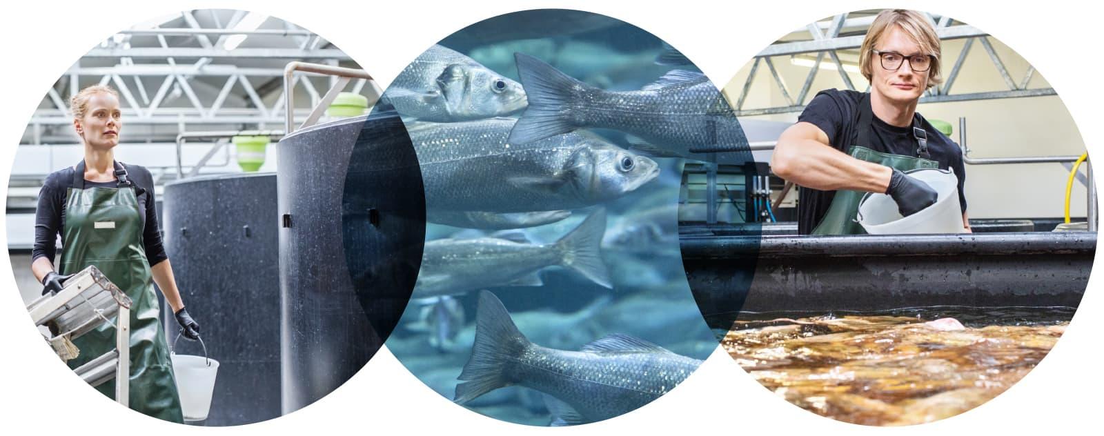 Aquaculture UV