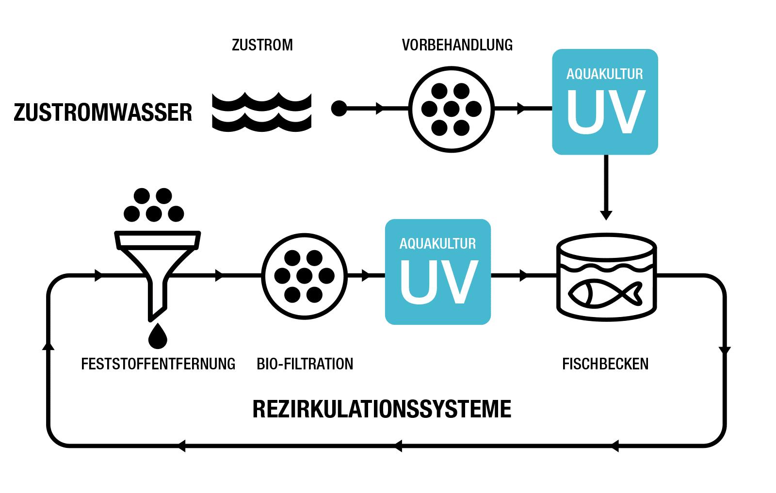Anordnung von UV-Systemen in einem Aquakultur-Wassersystem.